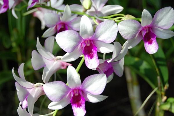 dia-dos-namorados-flores-orquideas
