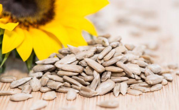 semente-de-girassol